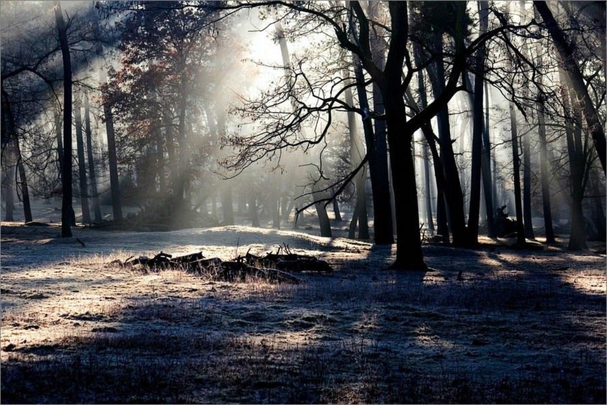 Les rayons du soleil éclairent une forêt sombre