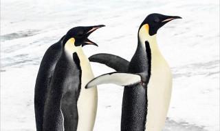 SEO : découvrez l'algorithme Google Penguin et son impact sur les liens