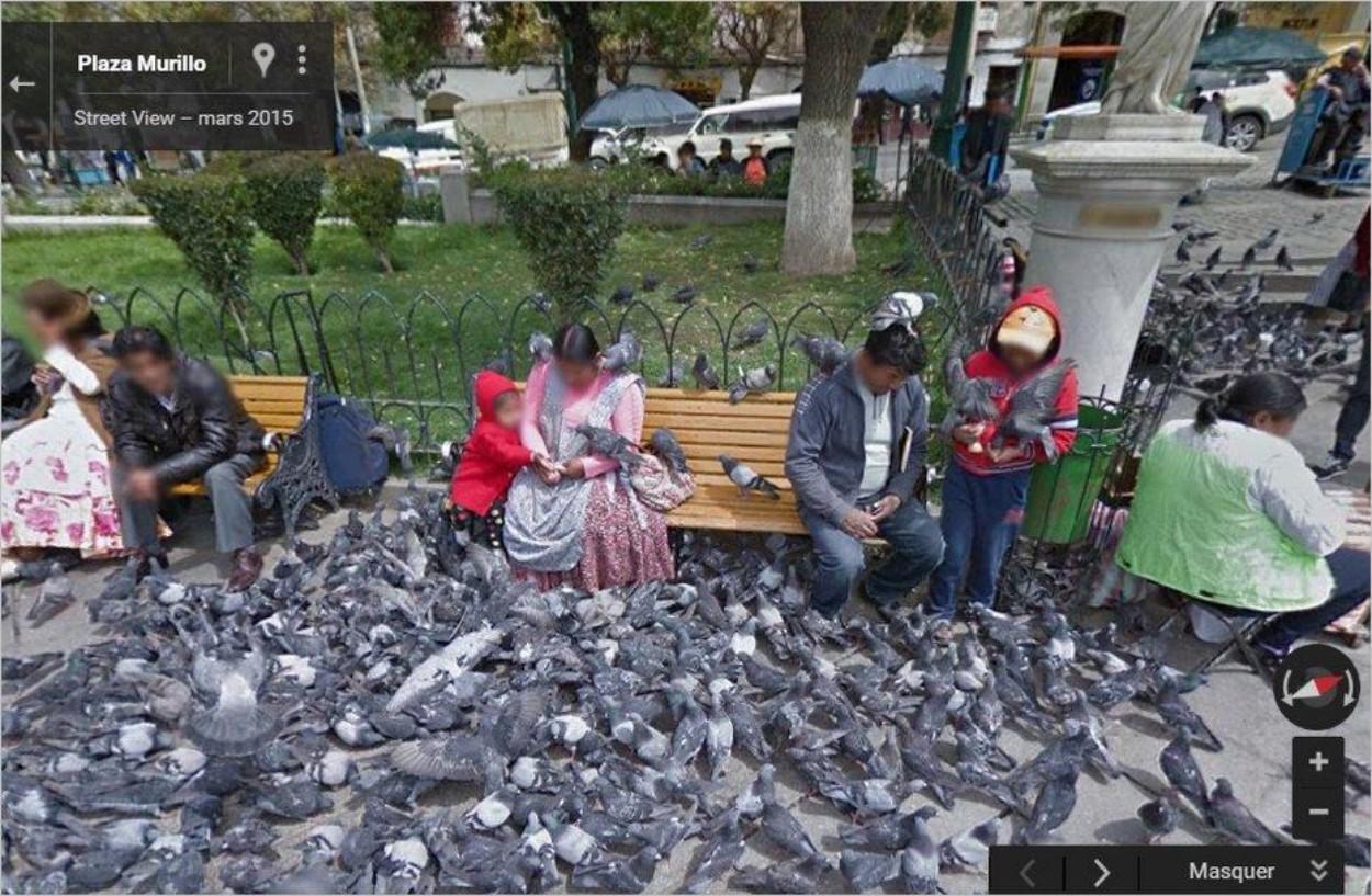 Pigeons en folie
