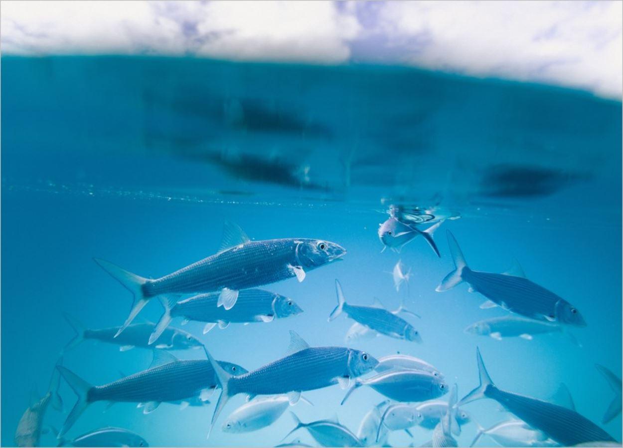 Acheter du poisson ou apprendre à pêcher ?